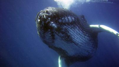 国際捕鯨委員会(IWC)脱退に欧州連合(EU)加盟国が不快感  経済連携協定(EPA)発効を目前に、多国間枠組みの重要性を考える